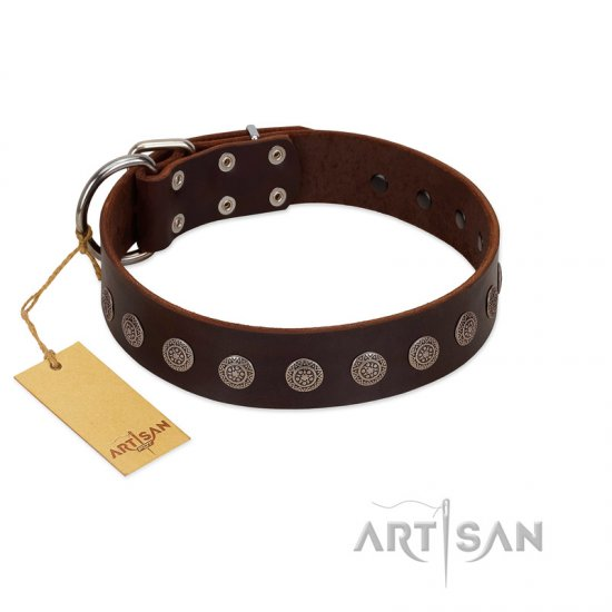 """Starry-Eyed"" Best Quality FDT Artisan Brown Designer Leather American Bulldog Collar with Small Plates"