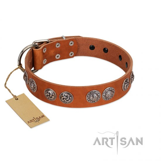 """Woofy Majesty"" FDT Artisan Tan Leather American Bulldog Collar with Round Silver-like Plates"