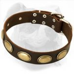 Retro Rulz - Gorgeous Vintage Dog Leather Collar for Americn Bulldog