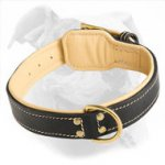 Nappa Padded Leather American Bulldog Collar for Training and Walking