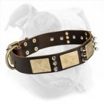 War-Style Leather Dog Collar with Brass Plates and Nickel Spikes for American Bulldog