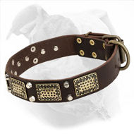 American Bulldog Leather Collar with Large Brass Plates