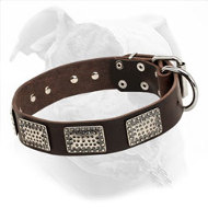 "Leather American Bulldog Collar Made in ""Rococo Style"""