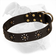 Decorated Leather Collar for American Bulldog | Spring Mood