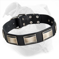 Buy Leather American Bulldog Collar with Decorated Large Nickel Plates for Walking