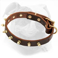 Stylish Leather American Bulldog Collar with Brass Spikes