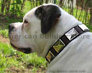 American Bulldog leather dog collar & vintage massive plates.