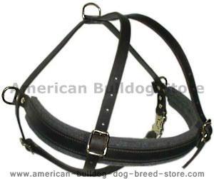 Handmade leather dog harness