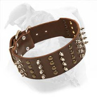 Extra Wide Leather American Bulldog Collar with Spikes and Studs