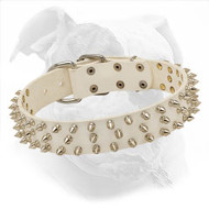 White Leather American Bulldog Collar with Spikes for Fashionable Walking