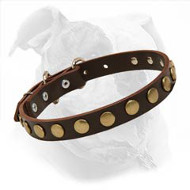 Leather American Bulldog Collar with Round Studs for Fashionable Walking