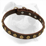 Leather American Bulldog Collar with Dotted Round Studs