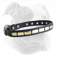 Leather American Bulldog Collar with Brass Plates for Daily Fashionable Walking