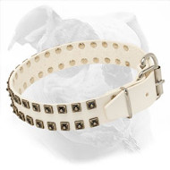 White Leather Collar with Caterpillar Studs for American Bulldog Elegant Walking