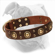 "Decorated American Bulldog Collar | ""Golden Knights"""