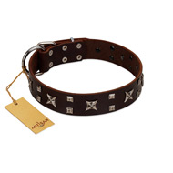 """Bigwig Woof"" FDT Artisan Brown Leather American Bulldog Collar with Chrome Plated Stars and Square Studs"