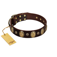 """Bronze Idol"" FDT Artisan Brown Leather American Bulldog Collar with Eye-catching Ovals and Small Studs"
