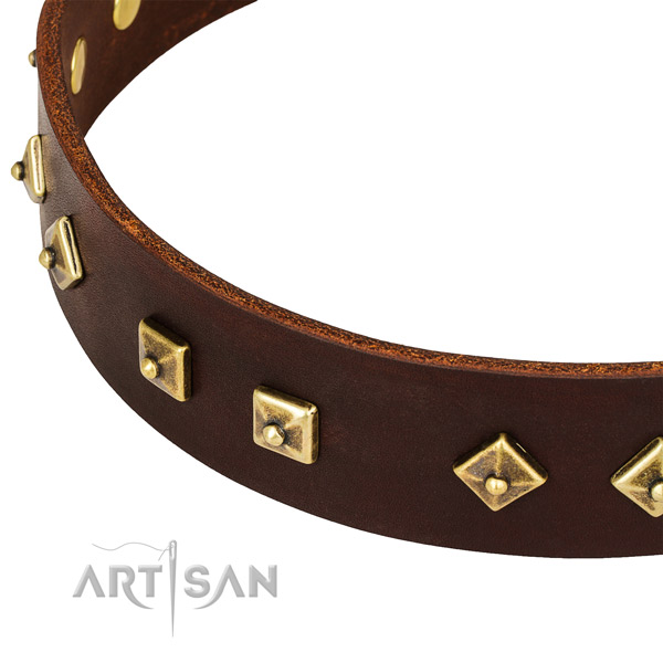 Designer full grain leather collar for your stylish pet