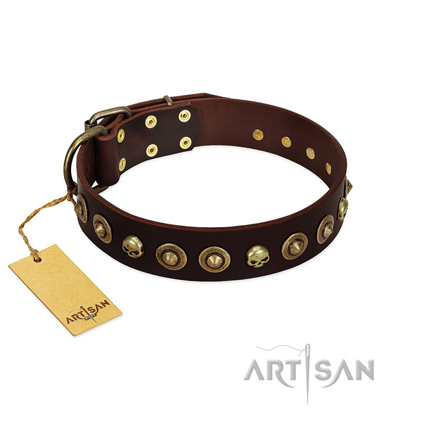 Natural leather collar with significant studs for your four-legged friend