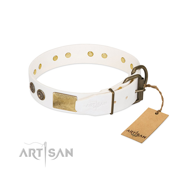 Reliable traditional buckle on full grain natural leather collar for fancy walking your canine