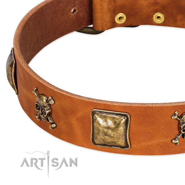 Significant natural leather dog collar with durable studs