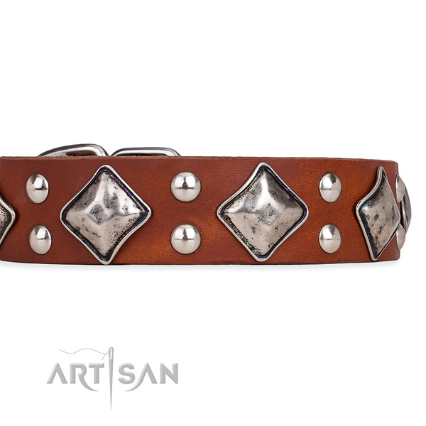 Leather dog collar with fashionable strong embellishments