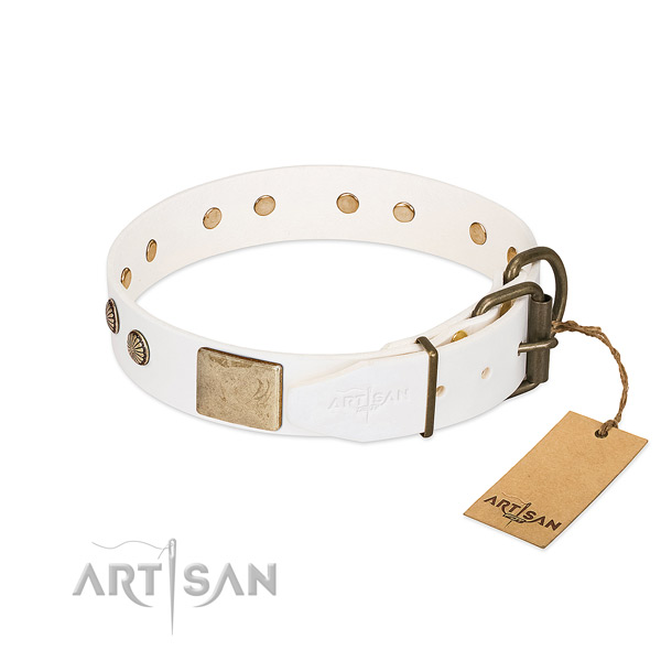 Strong D-ring on everyday walking dog collar