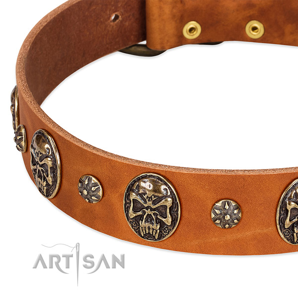 Corrosion proof adornments on full grain leather dog collar for your dog