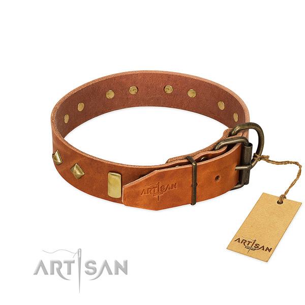 Stylish walking full grain leather dog collar with extraordinary adornments