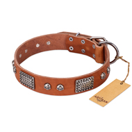 """Sparkling Skull"" FDT Artisan Tan Leather American Bulldog Collar with Old Silver Look Plates and Skulls"