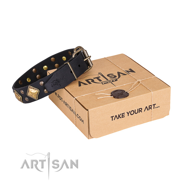 Everyday use dog collar with Awesome durable adornments