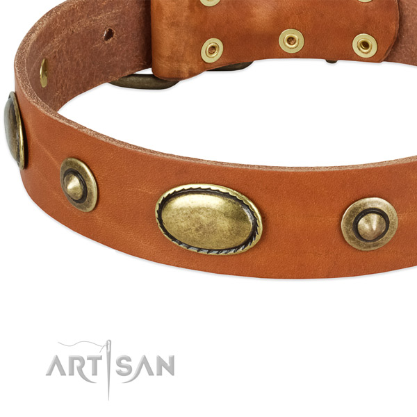 Corrosion resistant studs on genuine leather dog collar for your doggie