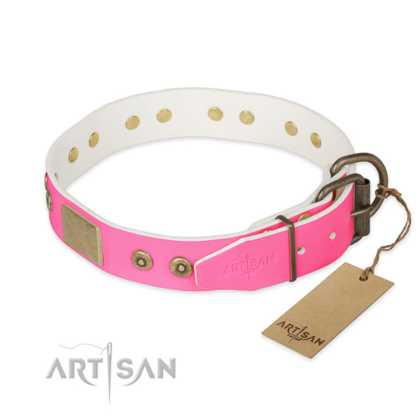 Corrosion resistant studs on everyday walking dog collar