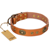 """Dandy Pet"" FDT Artisan Handcrafted Tan Leather American Bulldog Collar"