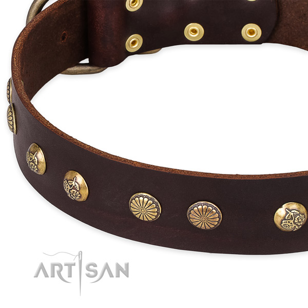 Leather collar with durable fittings for your impressive canine