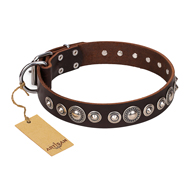 """Step and Sparkle"" FDT Artisan Glamorous Studded Brown Leather American Bulldog Collar"