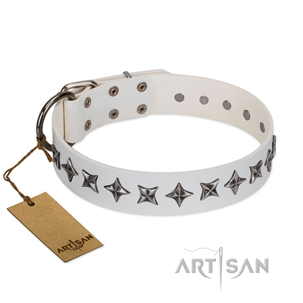 Everyday walking dog collar of quality full grain genuine leather with decorations