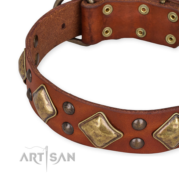 Full grain genuine leather collar with rust resistant buckle for your impressive four-legged friend