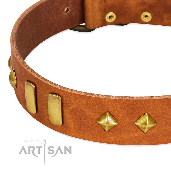 Stylish walking natural leather dog collar with fashionable embellishments