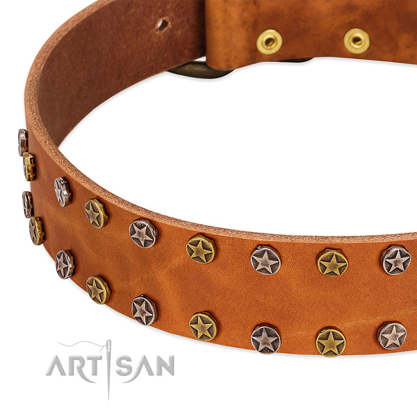 Walking natural leather dog collar with exceptional embellishments