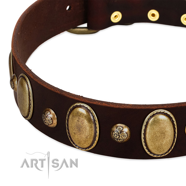 Genuine leather dog collar with incredible studs