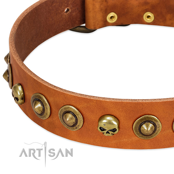 Stylish adornments on full grain natural leather collar for your four-legged friend