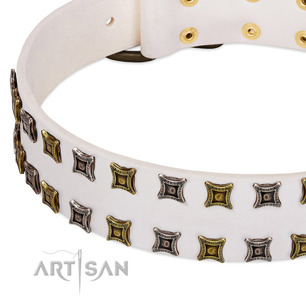 Full grain leather dog collar with adornments for your stylish dog