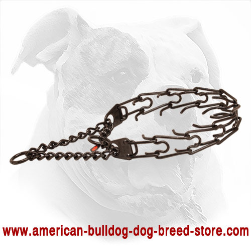 Pinch collar of rust resistant black stainless steel for badly behaved canines
