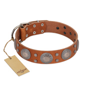 """Far Star"" FDT Artisan Tan Leather American Bulldog Collar with Engraved Studs"