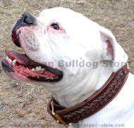Handcrafted leather dog collar- American Bulldog