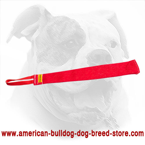 Training American Bulldog Bite Rag