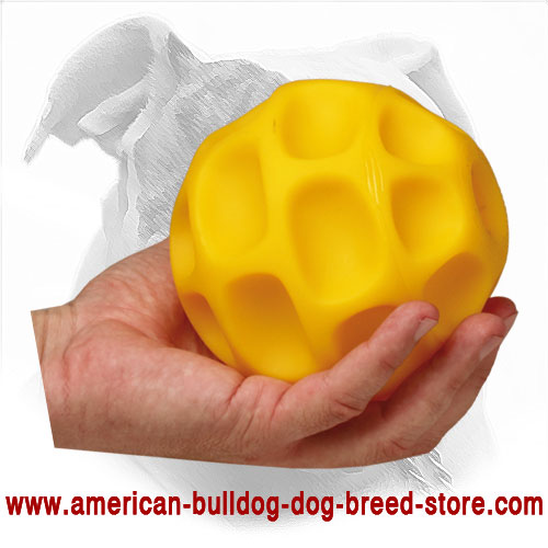 Training American Bulldog Ball