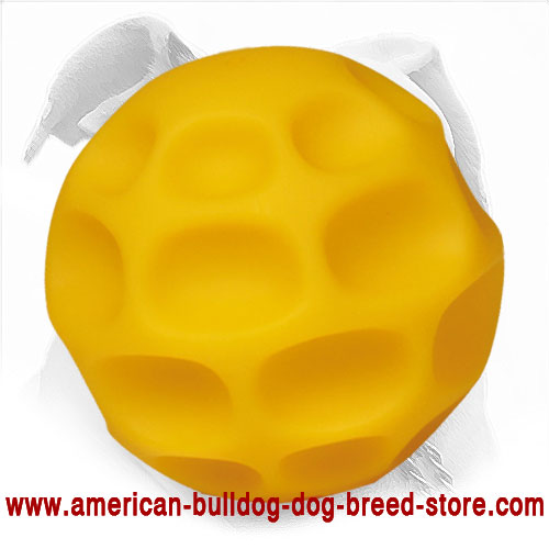 Chewing American Bulldog Ball