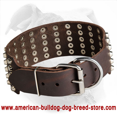 Wide Leather American Bulldog Collar